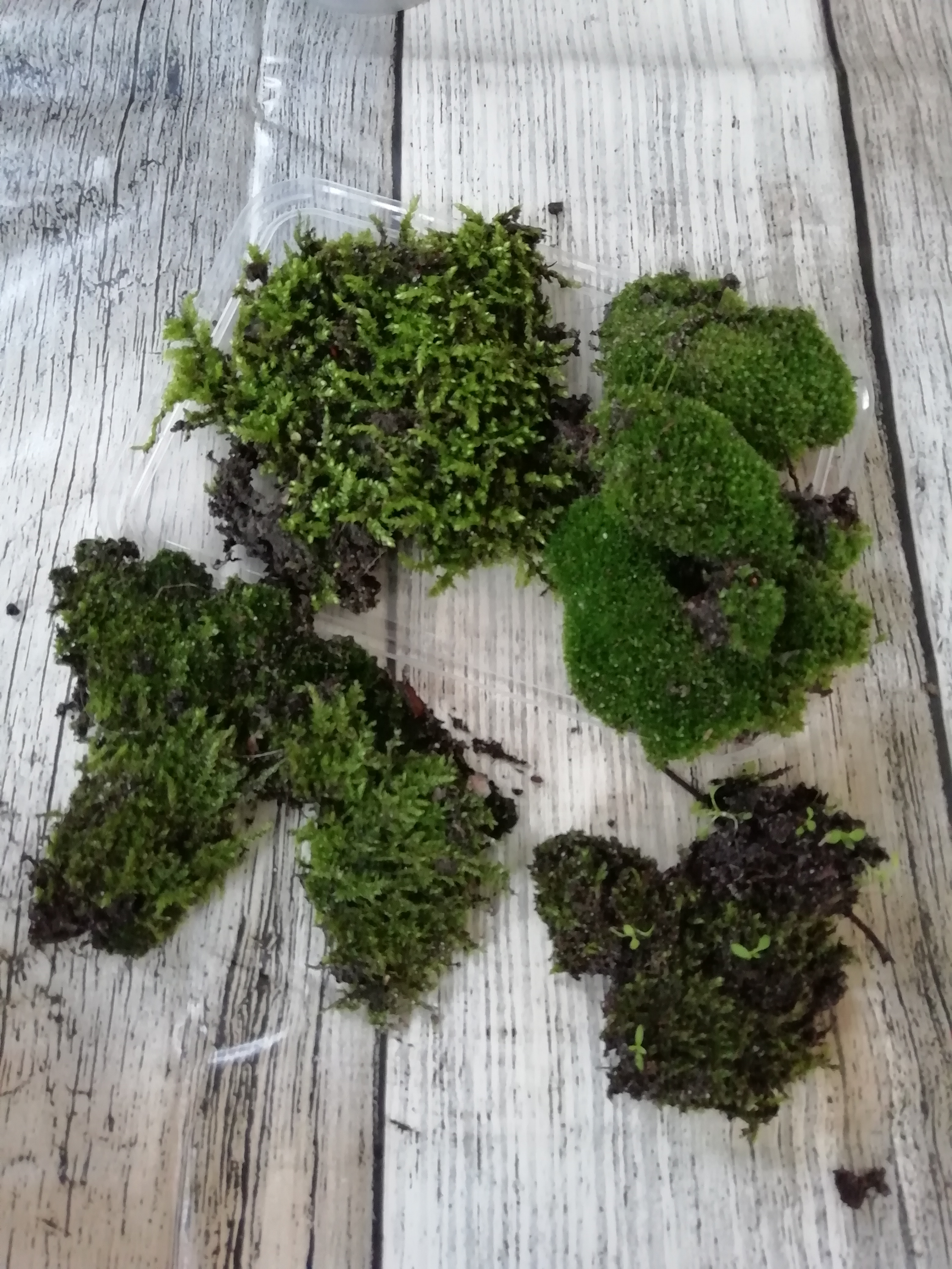 Picture of mosses